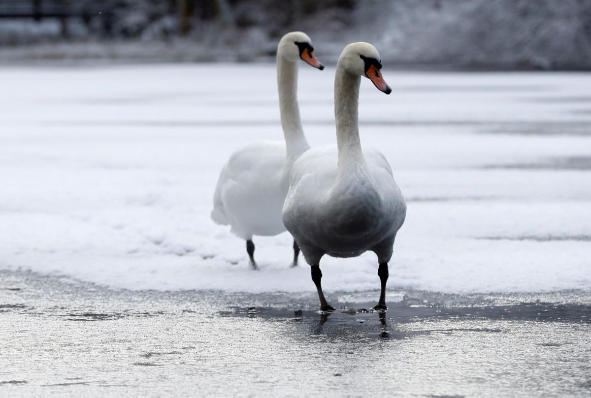 Загиблих птахів виявили ще в одному приморському районі Херсонщини