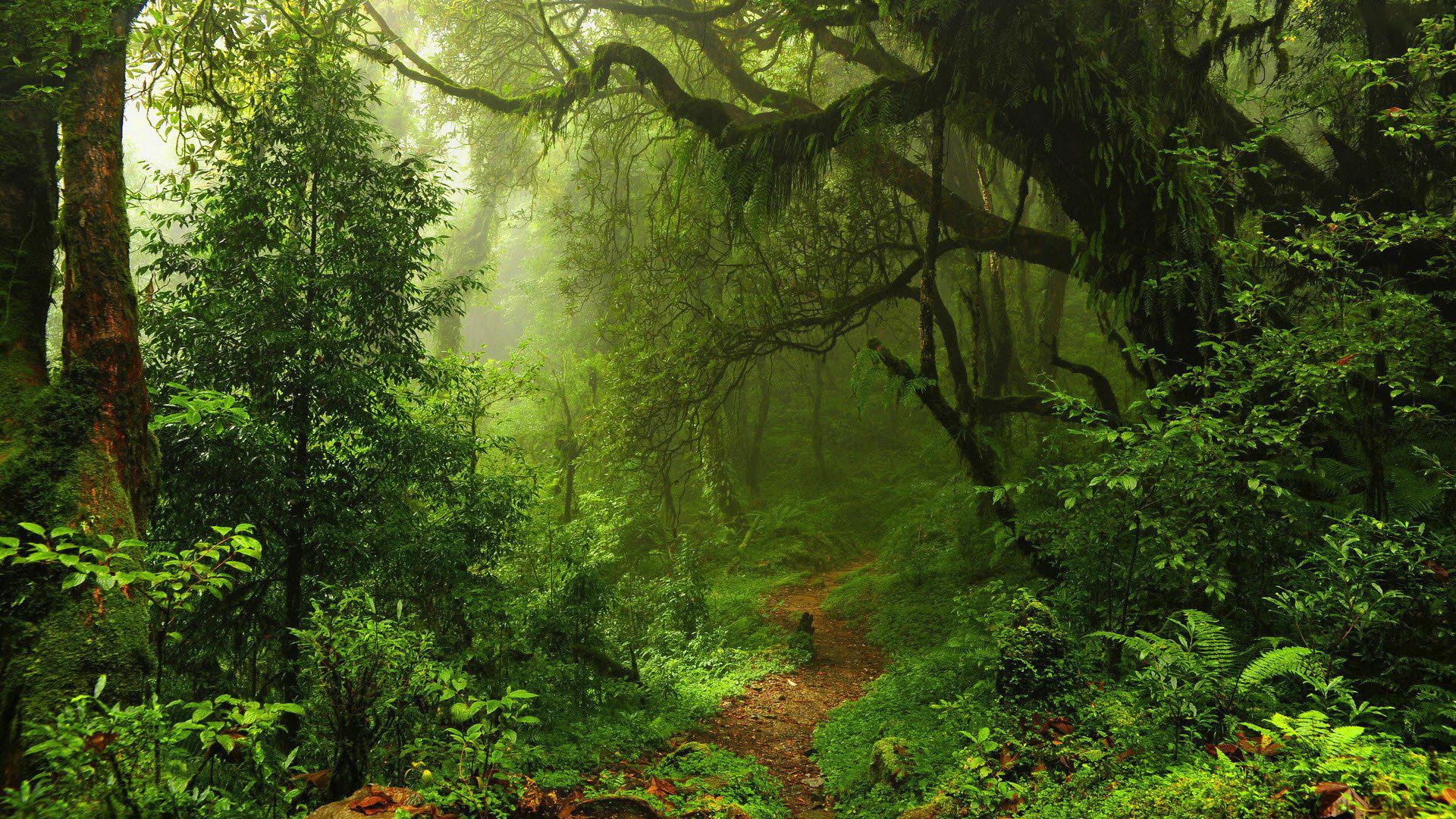 Бюджет 2020: На збереження природно-заповідного фонду передбачено 435 млн грн