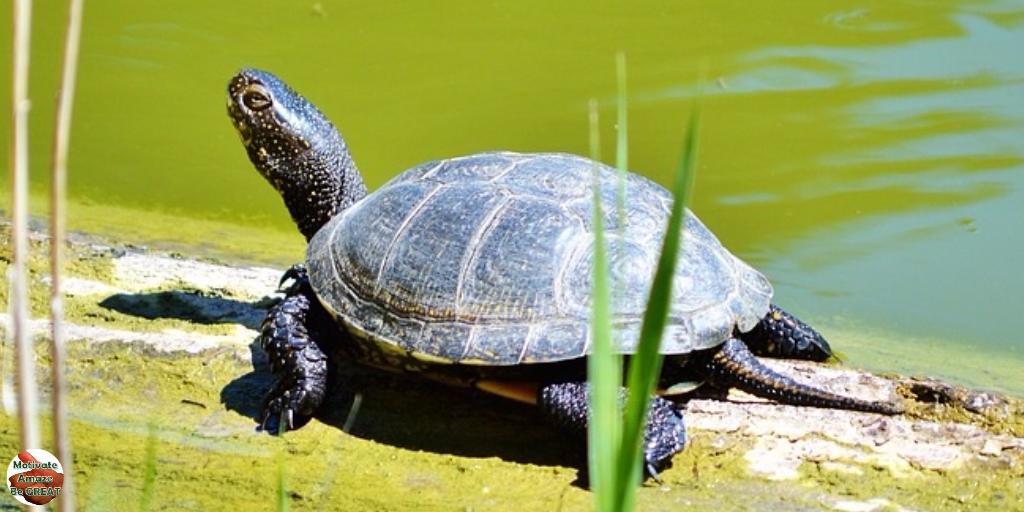 Екологи не помітили турборежиму в реалізації екологічних пріоритетів урядом Гончарука